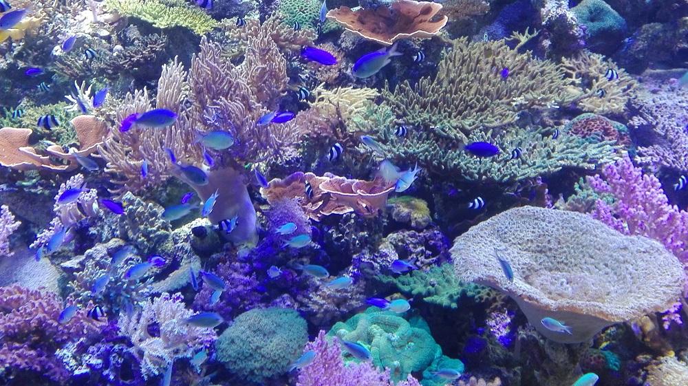 名古屋水族館サンゴ礁の海