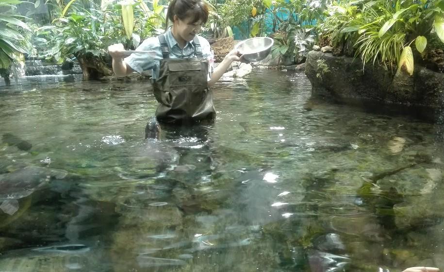 亀の餌やりするお姉さん名古屋水族館