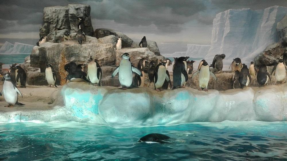 ペンギンたち名古屋水族館