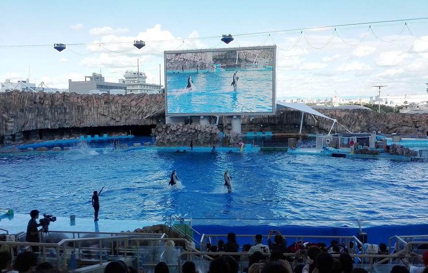 巨大イルカショープール