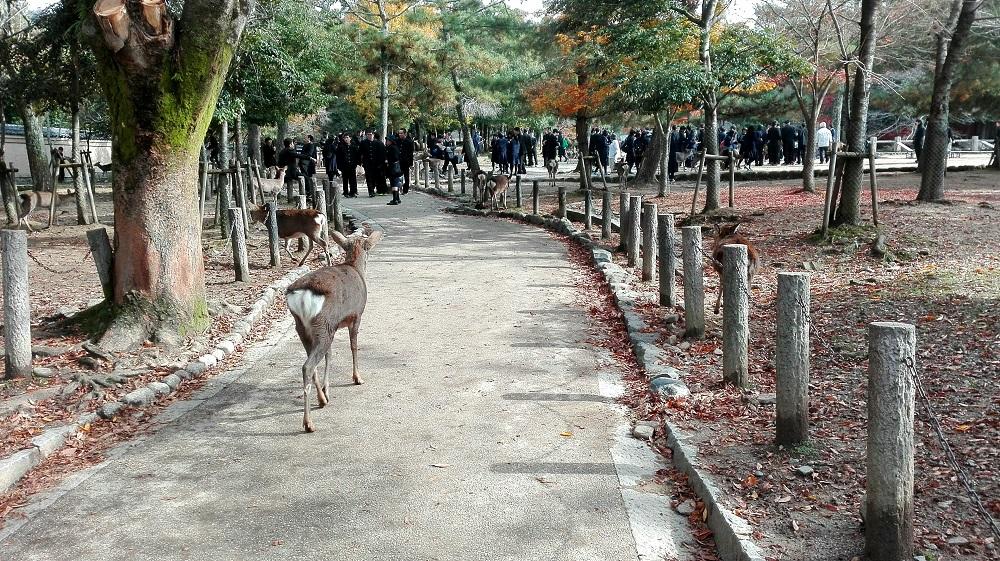 鹿と就学旅行生