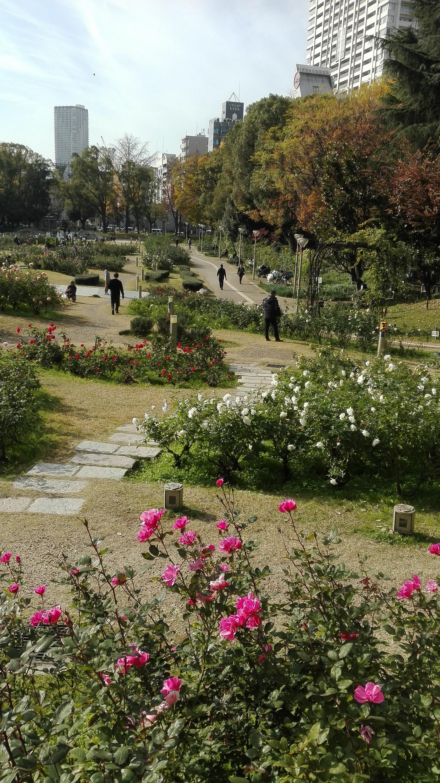 靭公園お花