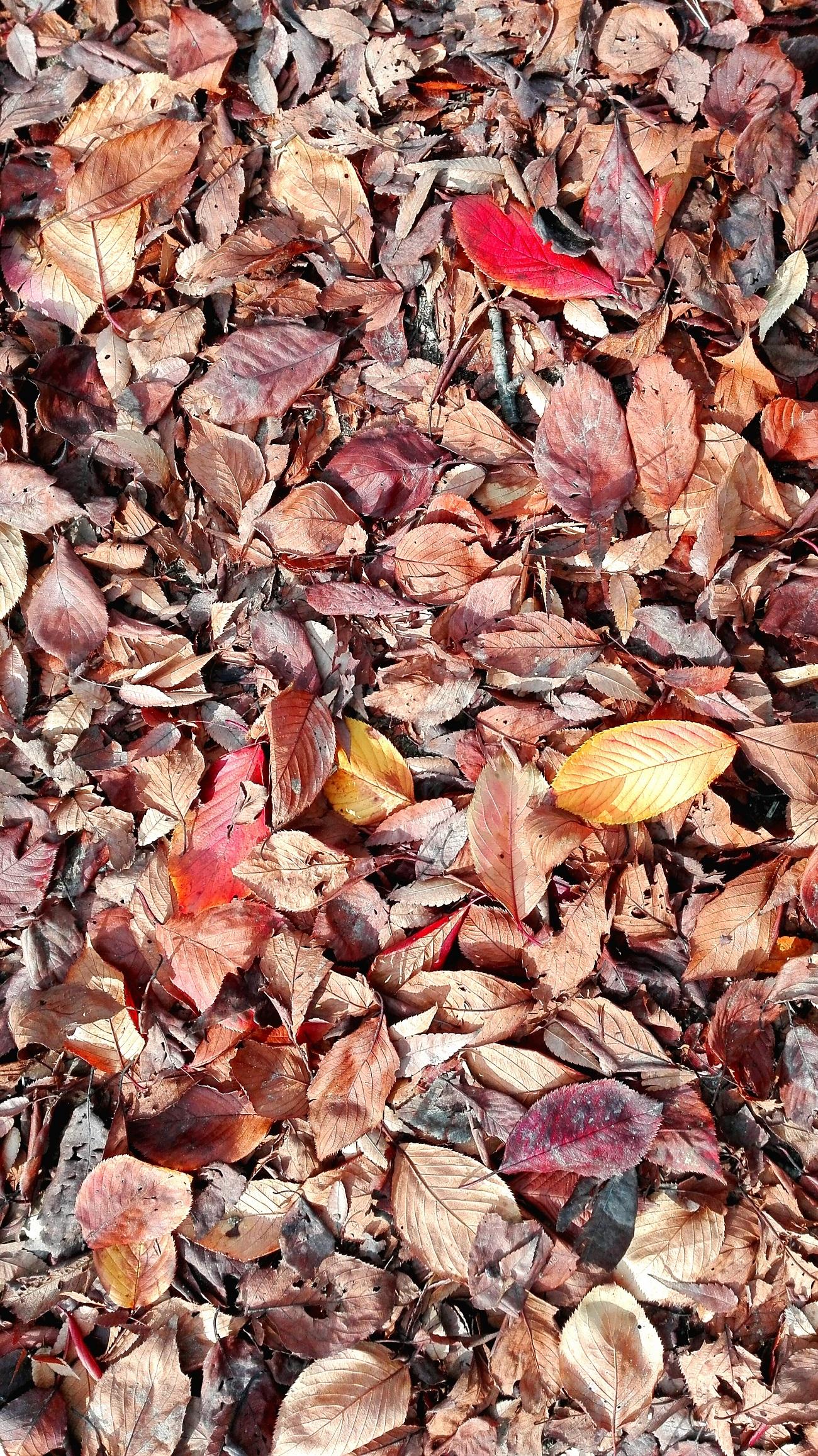 靭公園落ち葉のふとん