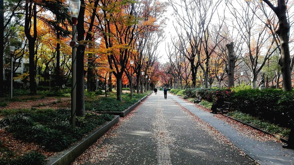靭公園ケヤキ並木