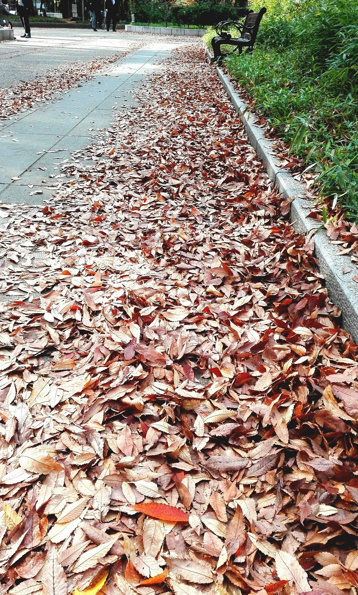 靭公園落ち葉いっぱい並木道